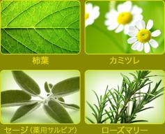 香草カラー